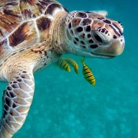 Sea Turtle Season